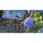 Gartenbewässerung oberirdisch Brausen,...