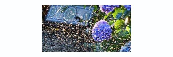 Gartenbewässerung oberirdisch